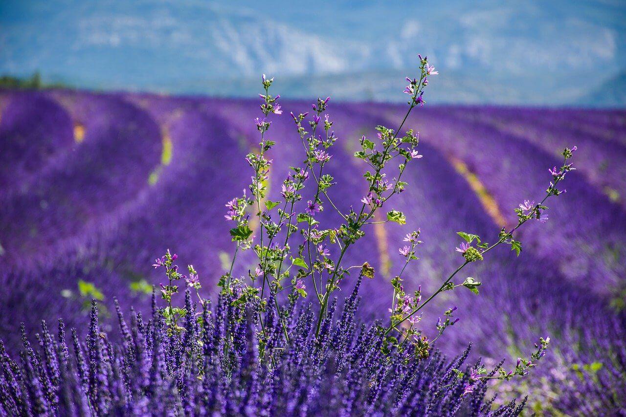 pinel Alpes-de-Haute-Provence